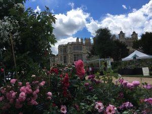 Audley End Flower Show - Trevor White Roses