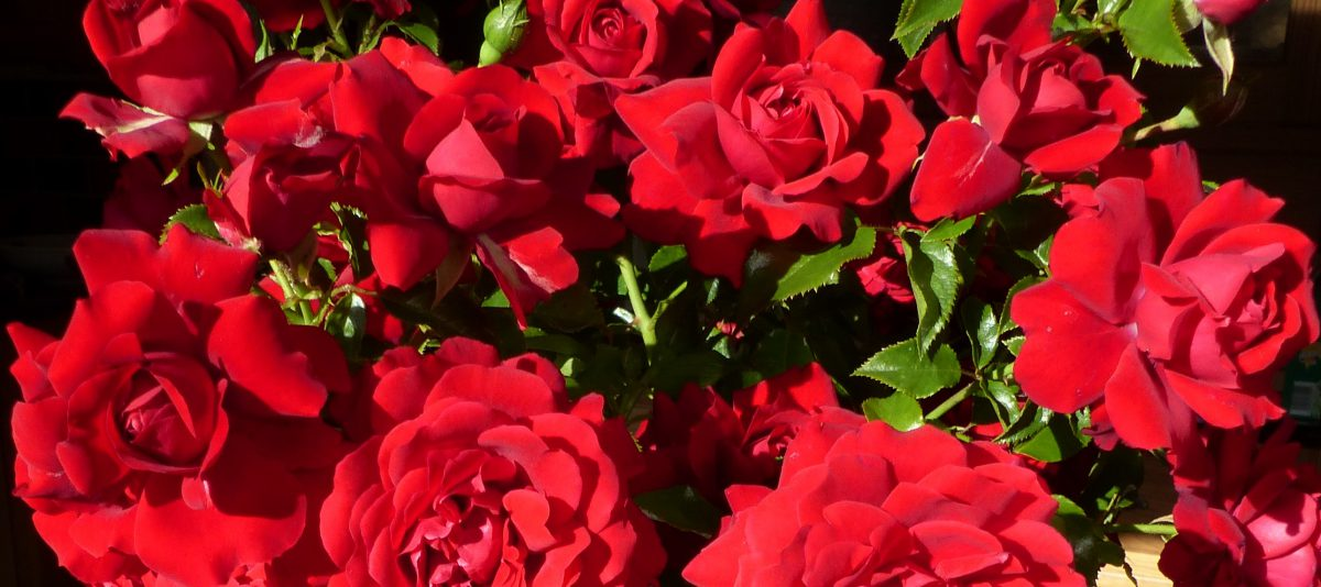 A Dozen Red Roses Valentines Inspiration